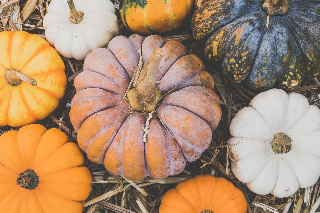 Read more about the article Fall Fun in Central California